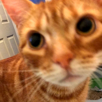 Photo uploaded to #FurryFriends by shauna A.