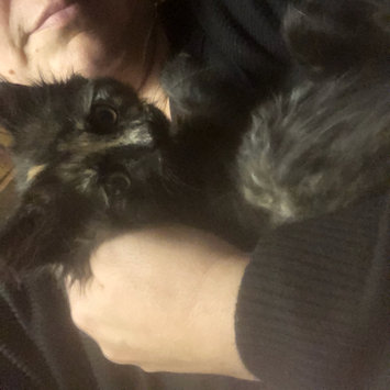 Photo uploaded to #FurryFriends by Shannyn C.