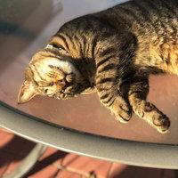 TEMPTATIONS™ Classic Treats For Cats Catnip Treats uploaded by Ruff L.