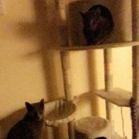 Armarkat Cat Tree uploaded by Amanda B.