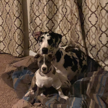 Photo uploaded to #FurryFriends by Mikaela M.