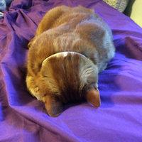TEMPTATIONS™ Classic Treats For Cats Catnip Treats uploaded by Brandy L.