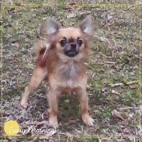 Advantage II Flea & Lice Treatment for Dogs uploaded by Amy B.