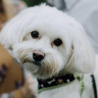 Greenies® Original Teenie® Dog Treats uploaded by Dani M.