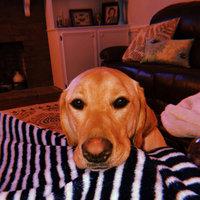 MilkBone Flavor Snacks Dog Biscuits uploaded by Casey V.