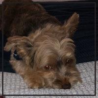 Dingo Twist Sticks uploaded by Stephanie D.