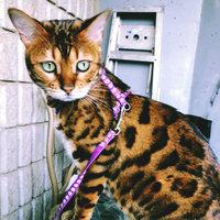Friskies® Cat Supplies Savory Shreds Turkey & Giblets uploaded by Lysha D.