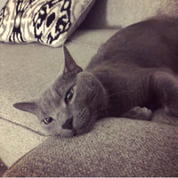 TEMPTATIONS™ Classic Treats For Cats Seafood Medley Cat Treats uploaded by Ashley F.
