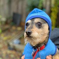 Greenies™ Pill Pockets™ Dog Treat uploaded by Rosy G.