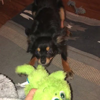 BarkBox uploaded by Roxanne R.