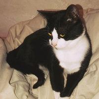 Friskies® Surfin' & Turfin' Favorites Cat Food uploaded by Jassmine L.