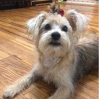 Pet Botanics Mini Training Rewards Dog Treats uploaded by Naa-Abeka M.