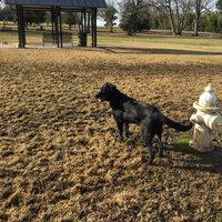 THE BLUE BUFFALO CO. BLUE™ Wilderness Trail Treats® Chicken Wild Bits™ Grain-Free Dog Training Treats uploaded by Jacqueline B.