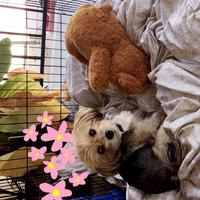 Burt's Bees Oatmeal Dog Shampoo uploaded by 🦒•💛•🌻 R.