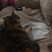 TEMPTATIONS™ Classic Treats For Cats Savory Salmon Cat Treats uploaded by Brandon B.