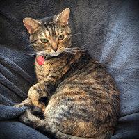 TEMPTATIONS™ MixUps Treats For Cats Surfer's Delight Cat Treats uploaded by Sarah T.