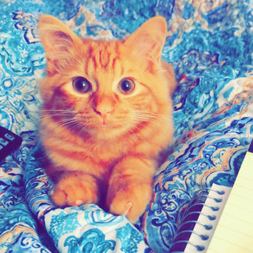 Photo uploaded to #FurryFriends by Jess T.