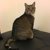 Friskies® Surfin' & Turfin' Favorites Cat Food uploaded by Nina M.
