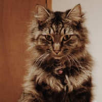 Iams™ Proactive Health™ Indoor Weight & Hairball Care Cat Food uploaded by Leigh O.