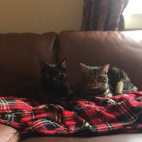 TEMPTATIONS™ Classic Treats For Cats Seafood Medley Cat Treats uploaded by Sara B.
