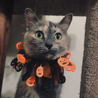 Rubies Halloween Spiders Collar Size: Small / Medium uploaded by Mikayla C.