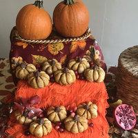 Tree of Life Organic Pumpkin Puree - 15 oz uploaded by Jennica S.