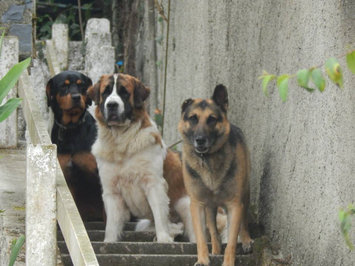 Photo of Furminator, Inc. FURminator Long Hair deShedding Tool for Large Dogs uploaded by Johana N.