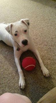 Photo of Alpo Dog Food uploaded by Leah W.