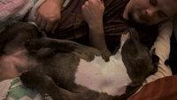 Pedigree Complete Nutrition Dog Food - Adult, 3.5 lb uploaded by Kate K.