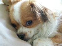 Zack & Zoey English Plaid Pet Sweater - Navy Blue uploaded by Jennifer D.