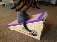 Kong CS3 Naturals Incline Scratcher with Cat Toy uploaded by Chloe D.