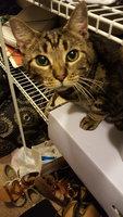 Whiskas Temptations Cat Treats Savory Salmon Flavor uploaded by Alana A.