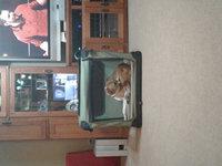 Firstrax NOZTONOZ Sof-Krate Indoor/Outdoor Pet Home uploaded by Melinda H.