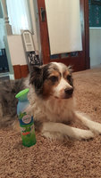 Febreze Air Effects Original Air Refresher with Gain 9.7 oz uploaded by Bailey R.