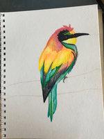 Chameleon Color Tones Marker Sets uploaded by Sophana S.