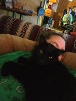Whiskas Temptations  Cat Treats uploaded by Jaquelyn D.