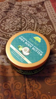 Tree Hut Coconut Lime Shea Body Butter uploaded by Jen V.