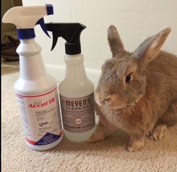 Photo of Mrs. Meyer's Clean Day Multi-Surface, Everyday Cleaner, Basic Scent, 16 fl oz uploaded by Katelyn L.