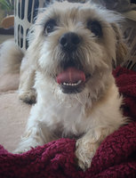 Pedigree® Dentastix® Daily Oral Care Treats uploaded by Niamh M.