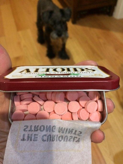 Altoids Cinnamon Mints uploaded by Cathy K.