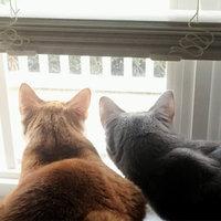TEMPTATIONS® SNACKY MOUSE™ Cat Toy uploaded by Jennifer D.