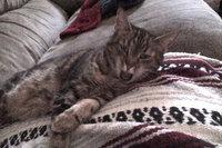 Hartz UltraGuard One Spot Flea and Tick Drops for Cats uploaded by Dani S.