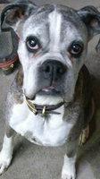 Pedigree® Complete Nutrition Adult Dog Food uploaded by Eva L.