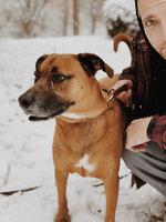 BLUE Wilderness® Salmon Recipe For Adult Dogs uploaded by Kayla J.