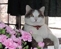 Furminator FURminatorA deShedding Short Haired Cat Tool uploaded by Boo the Deaf Kitty @.