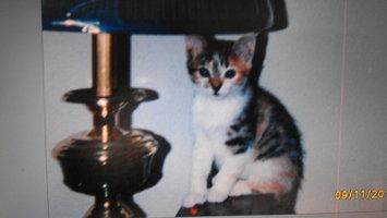 Photo of Purina Kitten Chow PurinaA Kitten ChowA Nurture Kitten Food uploaded by J Davis M.