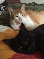 Whiskas Temptations  Cat Treats uploaded by Denzie L.
