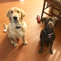 Simply NourishTM Large Breed Puppy Food uploaded by Savannah M.