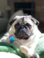 Good2Go Donut Print Dog Collar, Medium uploaded by Gina A.
