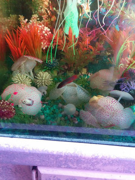 Photo of Marineland MARINELANDA Artifical Linden Aquarium Plant uploaded by Nathalie K.